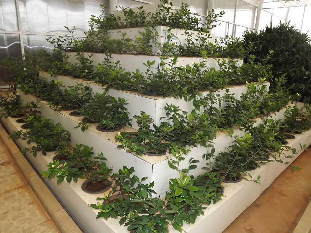 植物保raybet雷竞技凝济和营养液治理成果26