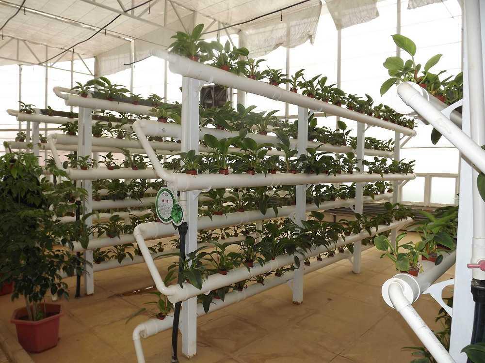 植物保raybet雷竞技凝济和营养液治理成果25