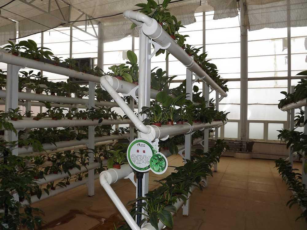 植物保raybet雷竞技凝济和营养液治理成果24