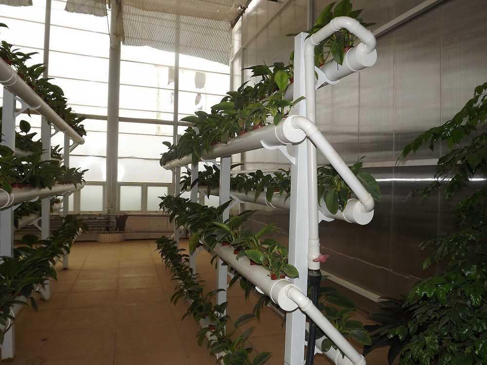 植物保raybet雷竞技凝济和营养液治理成果23