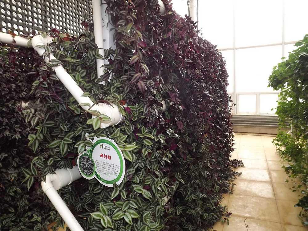 植物保raybet雷竞技凝济和营养液治理成果20