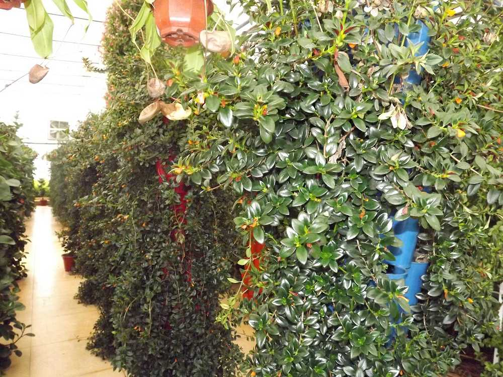 植物保raybet雷竞技凝济和营养液治理成果16