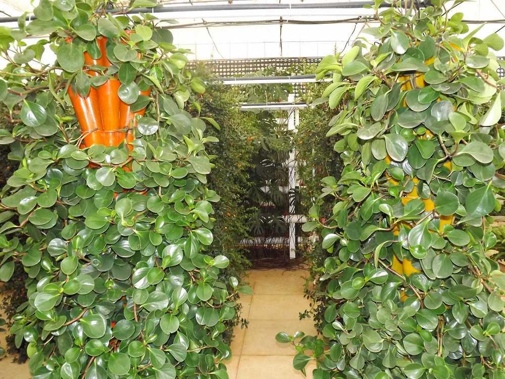 植物保raybet雷竞技凝济和营养液治理成果15