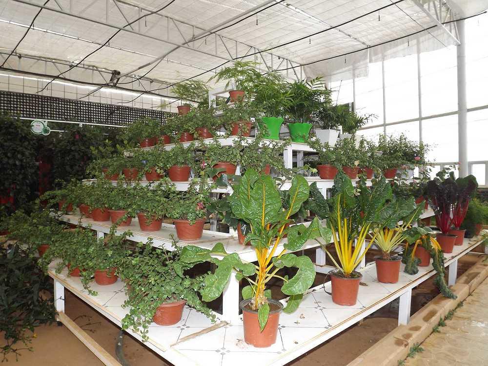 植物保raybet雷竞技凝济和营养液治理成果14