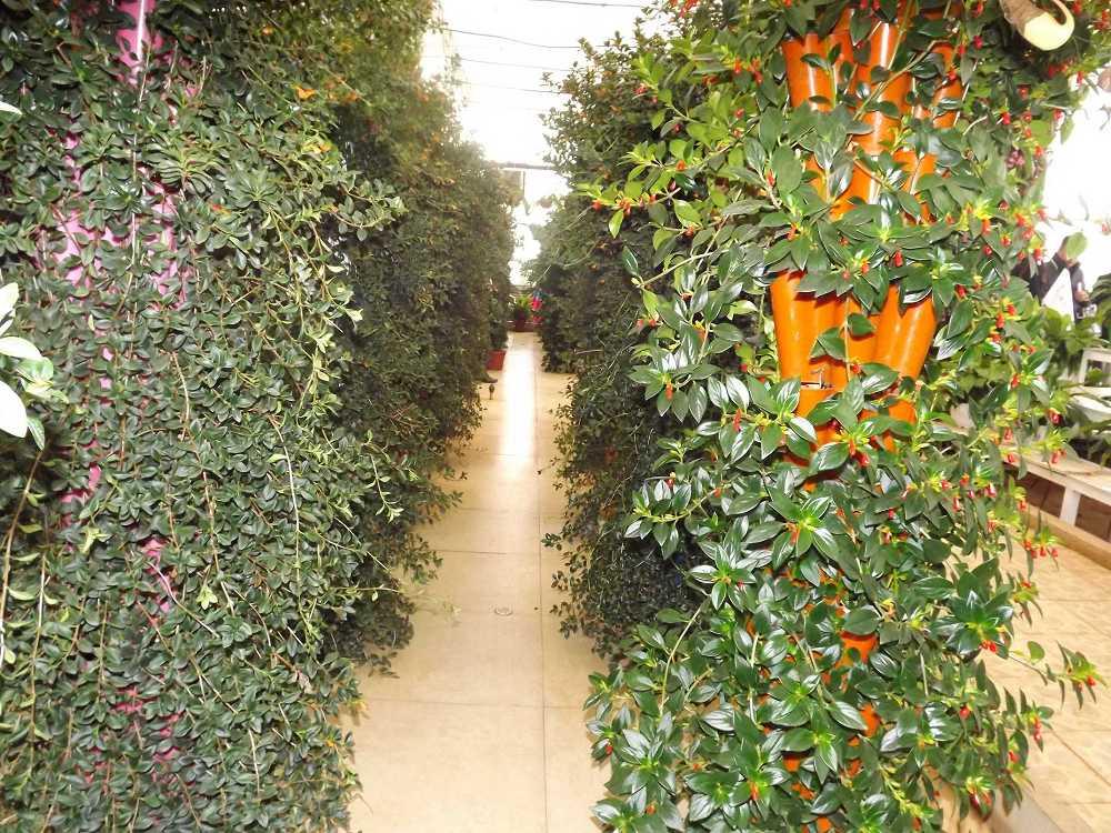 植物保raybet雷竞技凝济和营养液治理成果10