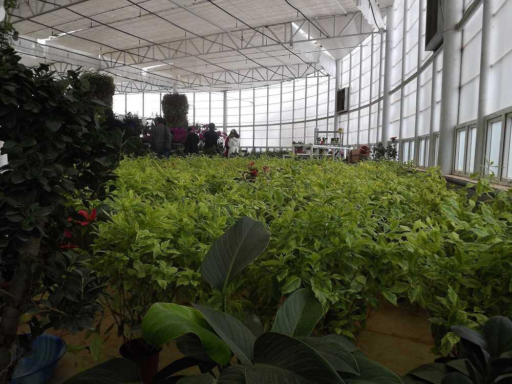 植物保raybet雷竞技凝济和营养液治理成果5