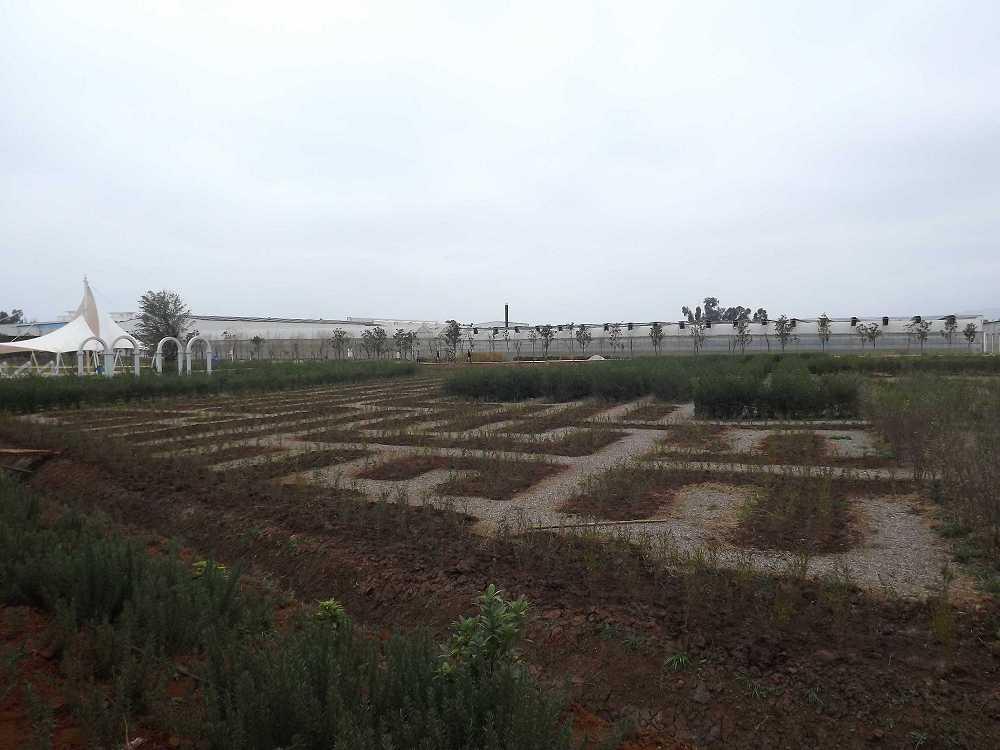 植物保raybet雷竞技凝济和营养液治理成果1